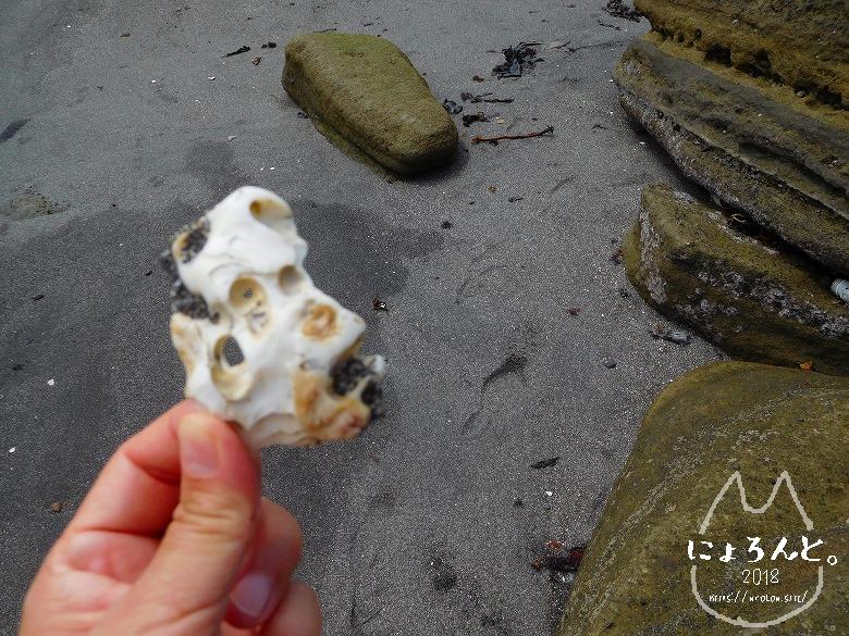 富津・竹岡(萩生/薬師堂近く)でビーチコーミング/穴の開いた石