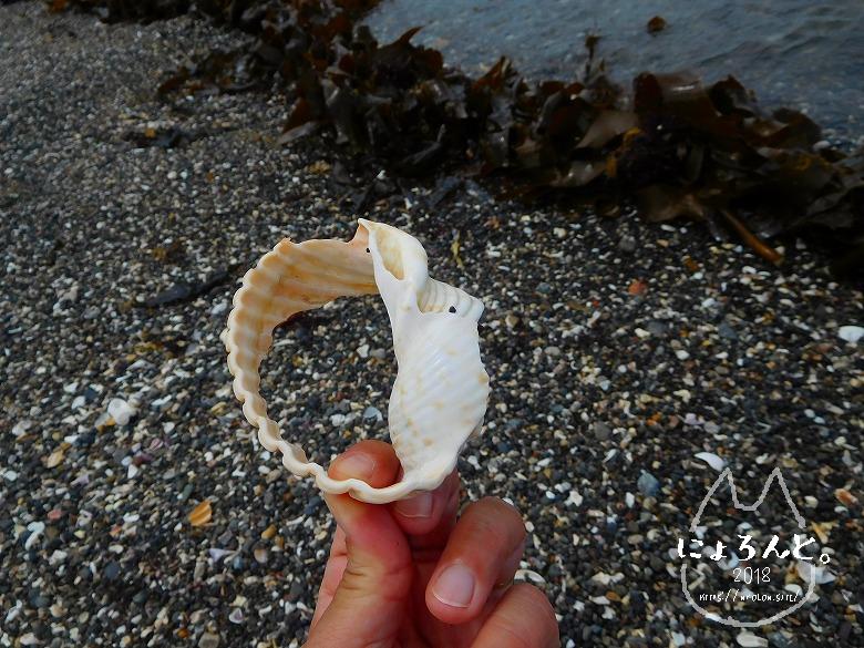 富津・竹岡(萩生/薬師堂近く)でビーチコーミング/巻貝の破片