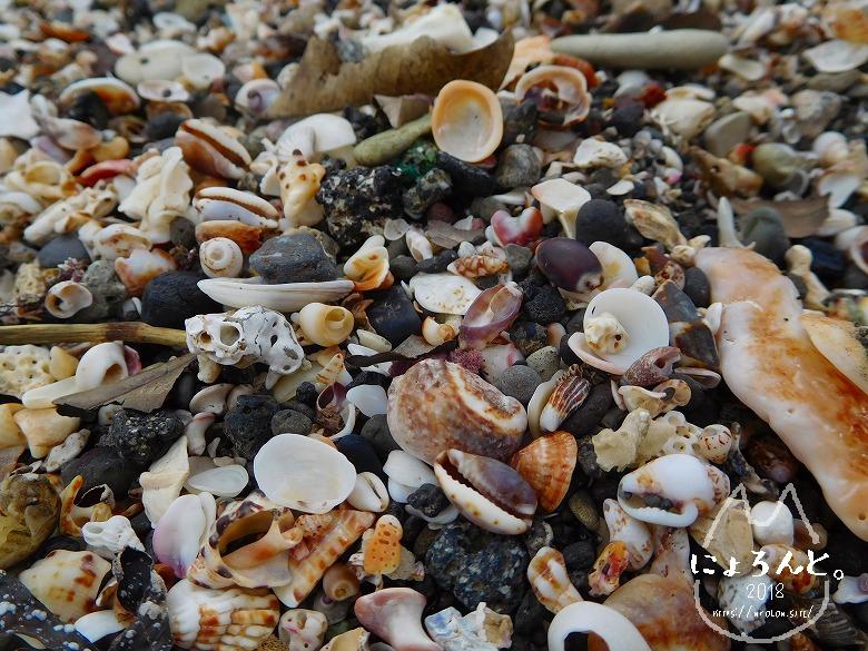 浜金谷海浜公園でビーチコーミング/浜のアップ