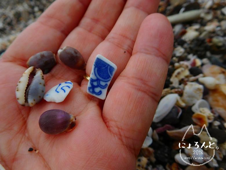 浜金谷海浜公園でビーチコーミング/陶片とタカラガイ