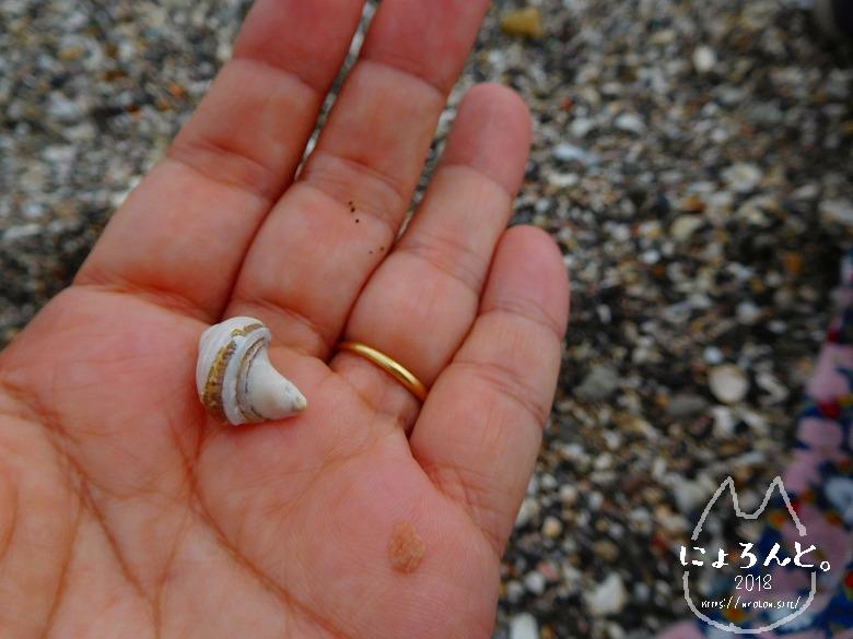 浜金谷海浜公園でビーチコーミング/白銀の貝