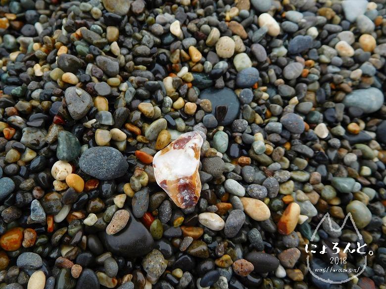 ヒスイ海岸(糸魚川海岸)でビーチコーミング/牡蠣殻